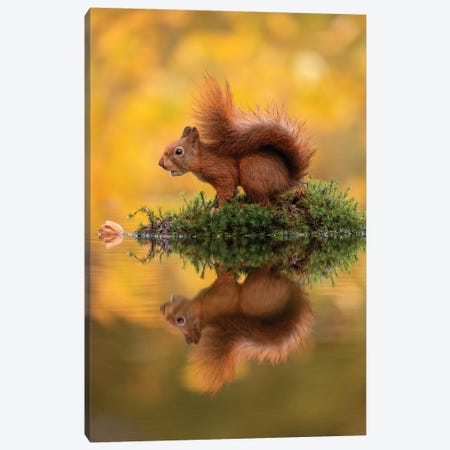 Red Squirrel On An Island Canvas Print #DDJ12} by Dick van Duijn Canvas Art Print