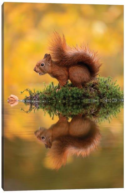 Red Squirrel On An Island Canvas Art Print