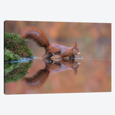 Red Squirrel Running Through The Water Canvas Print #DDJ13} by Dick van Duijn Canvas Print