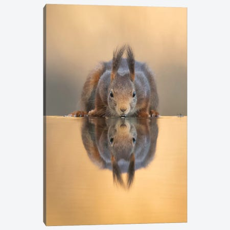 Thirsty Red Squirrel Canvas Print #DDJ25} by Dick van Duijn Canvas Art Print