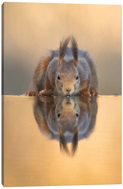 Thirsty Red Squirrel Canvas Art Print