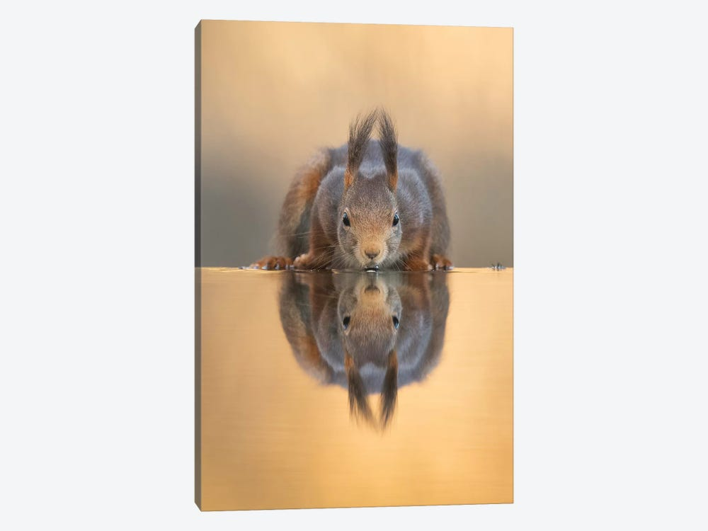 Thirsty Red Squirrel by Dick van Duijn 1-piece Canvas Artwork