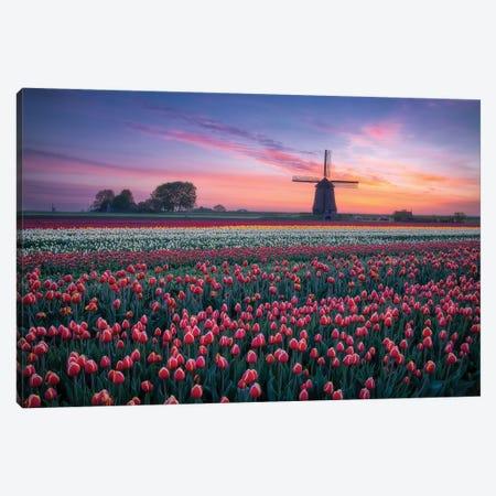 Windmill & Tulips Canvas Print #DDJ27} by Dick van Duijn Canvas Print