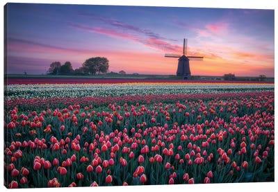 Windmill & Tulips Canvas Art Print
