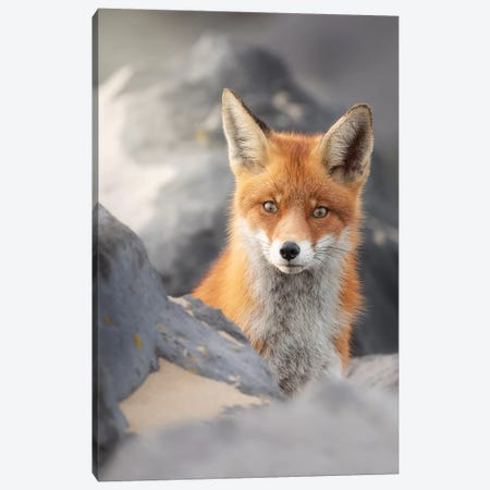 A Red Fox Between The Rocks Canvas Print #DDJ2} by Dick van Duijn Canvas Wall Art
