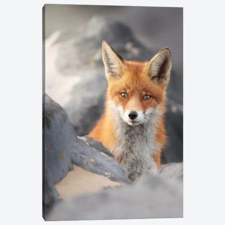 A Red Fox Between The Rocks Canvas Print #DDJ2} by Dick van Duijn Canvas Wall Art