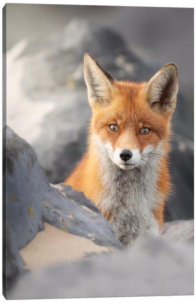 A Red Fox Between The Rocks Canvas Art Print