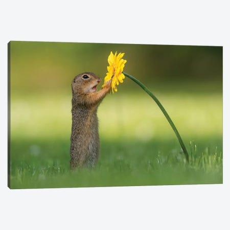 Curious Ground Squirrel Canvas Print #DDJ5} by Dick van Duijn Canvas Art Print