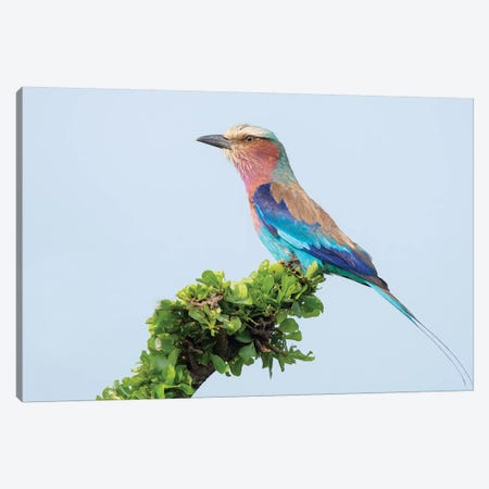Lilac-Breasted Roller Canvas Print #DDJ9} by Dick van Duijn Canvas Wall Art
