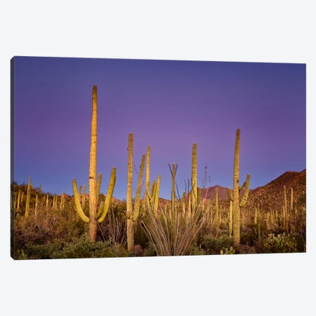 Cacti View I Canvas Print #DDR14} by David Drost Canvas Artwork