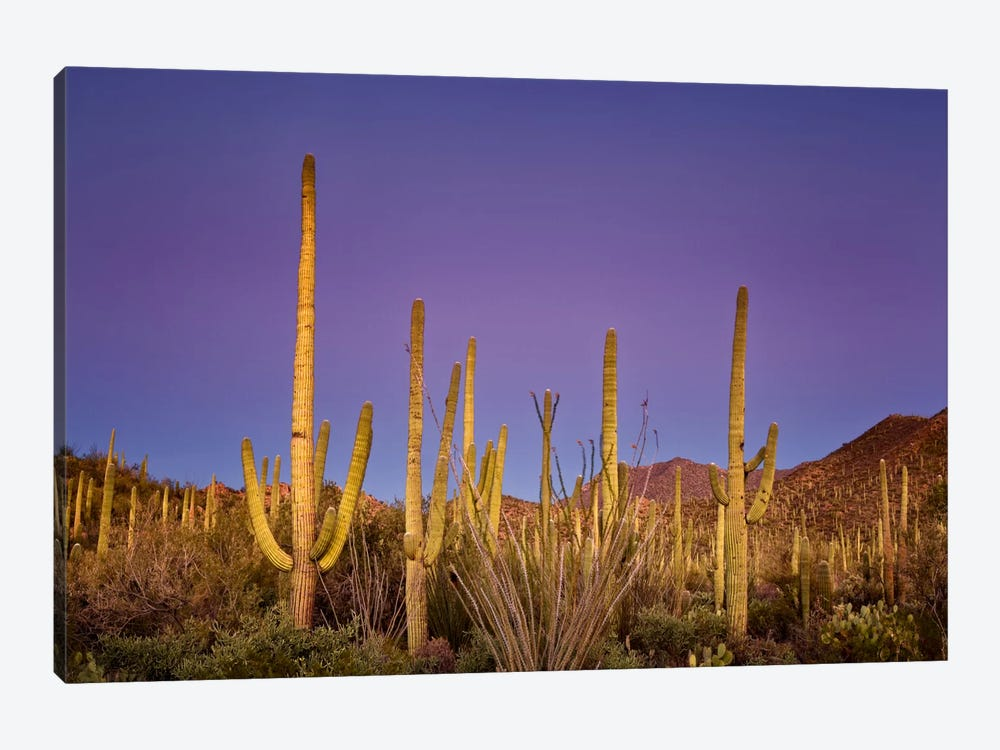 Cacti View I by David Drost 1-piece Canvas Artwork