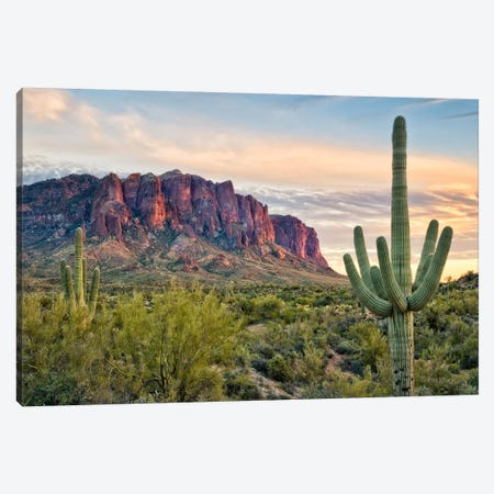 Cacti View II Canvas Print #DDR15} by David Drost Canvas Wall Art