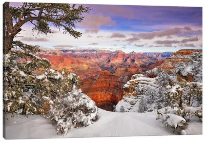 Snowy Grand Canyon II Canvas Art Print
