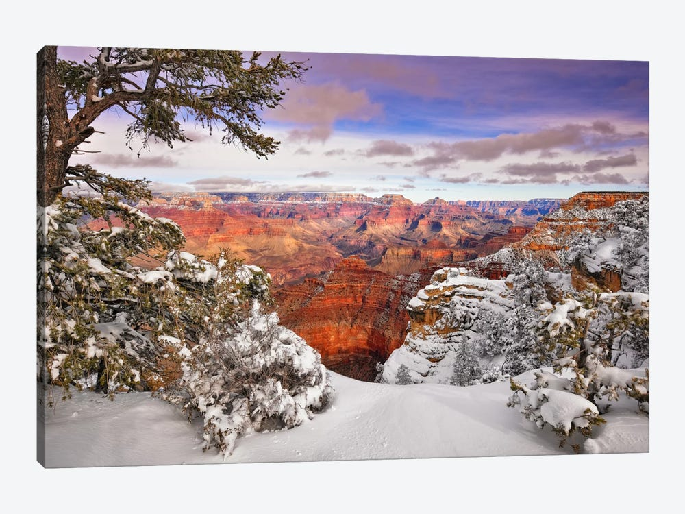 Snowy Grand Canyon II by David Drost 1-piece Canvas Print