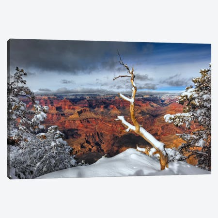 Snowy Grand Canyon III Canvas Print #DDR20} by David Drost Canvas Artwork