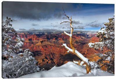 Snowy Grand Canyon III Canvas Art Print