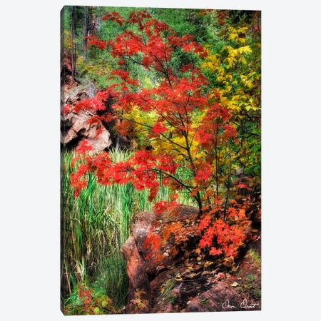 Peaceful Woods I Canvas Print #DDR44} by David Drost Art Print