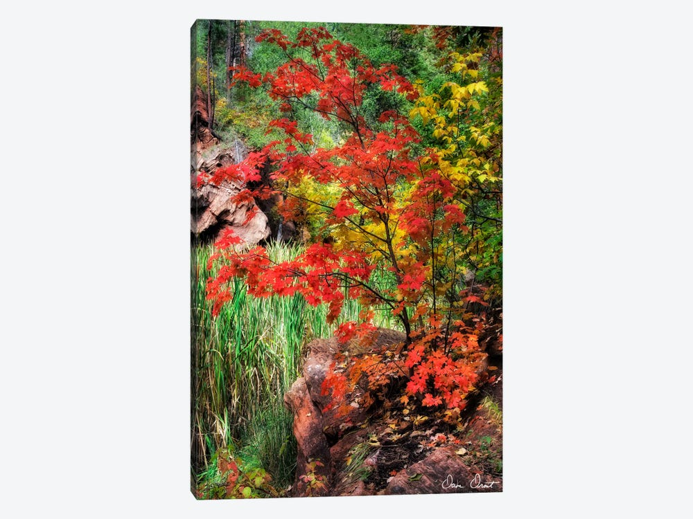 Peaceful Woods I by David Drost 1-piece Canvas Print