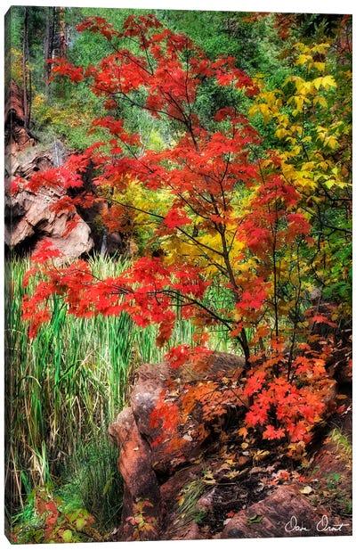 Peaceful Woods I Canvas Art Print