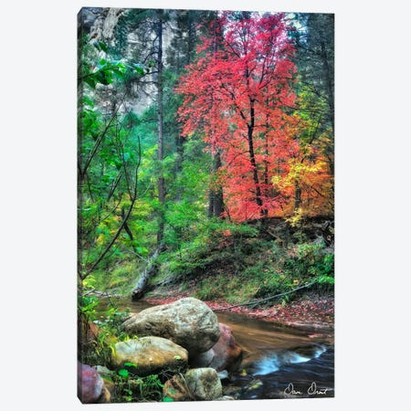 Peaceful Woods II Canvas Print #DDR45} by David Drost Canvas Print