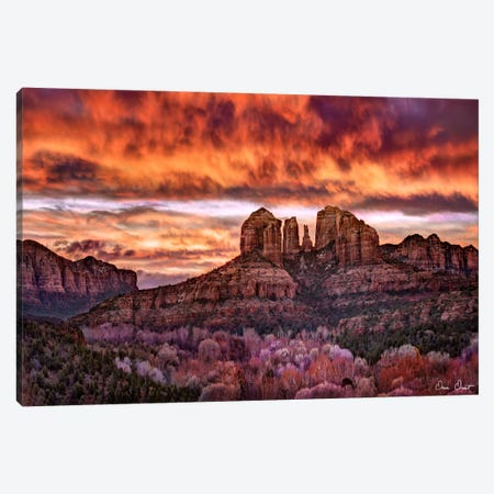 Pink Morning Glory IV Canvas Print #DDR49} by David Drost Canvas Artwork
