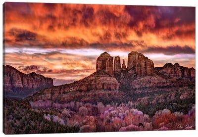 Pink Morning Glory IV Canvas Art Print