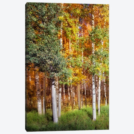Aspen Glen I Canvas Print #DDR5} by David Drost Canvas Art