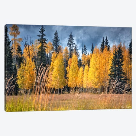Through The Yellow Trees I Canvas Print #DDR66} by David Drost Canvas Print