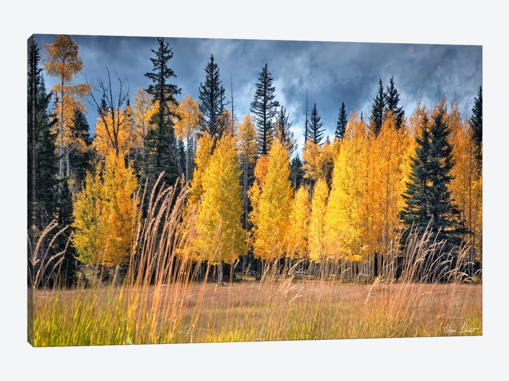 Through The Yellow Trees I by David Drost 1-piece Canvas Art Print