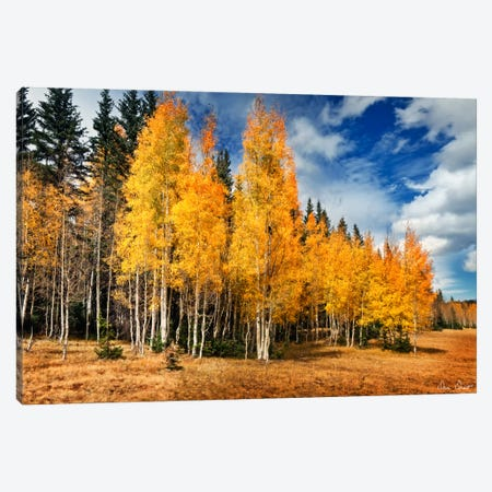 Through The Yellow Trees II Canvas Print #DDR67} by David Drost Canvas Print