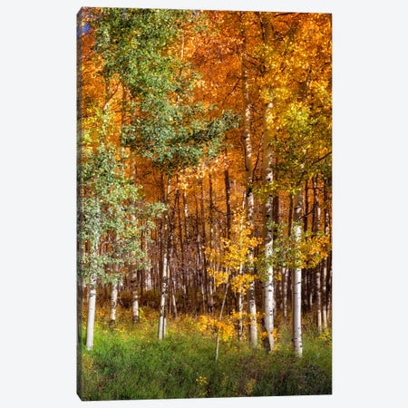 Aspen Glen II Canvas Print #DDR6} by David Drost Canvas Wall Art