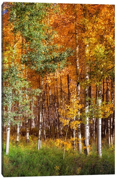 Aspen Glen II Canvas Art Print
