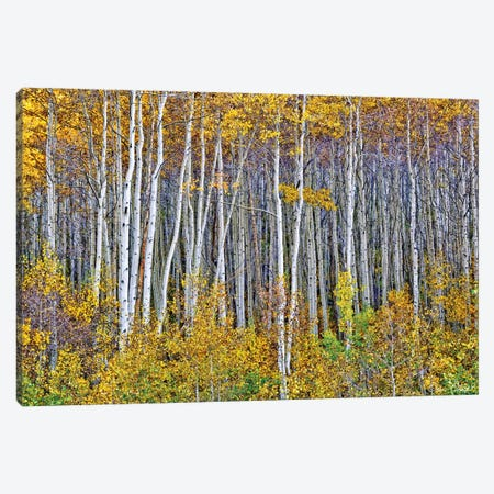 Yellow Woods I Canvas Print #DDR79} by David Drost Canvas Print