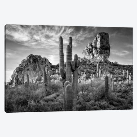 B&W Desert View I Canvas Print #DDR7} by David Drost Canvas Artwork