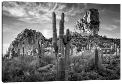 B&W Desert View I Canvas Art Print