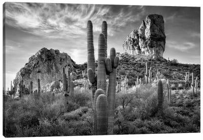 B&W Desert View I Canvas Art Print