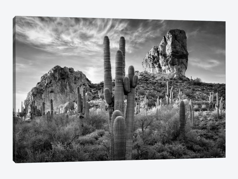 B&W Desert View I by David Drost 1-piece Canvas Print