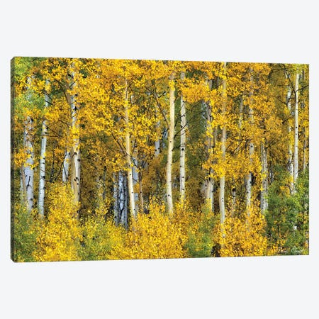 Yellow Woods II Canvas Print #DDR80} by David Drost Canvas Wall Art
