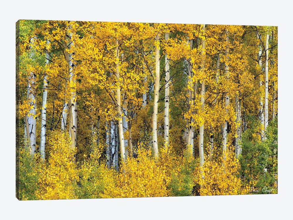 Yellow Woods II by David Drost 1-piece Canvas Art Print