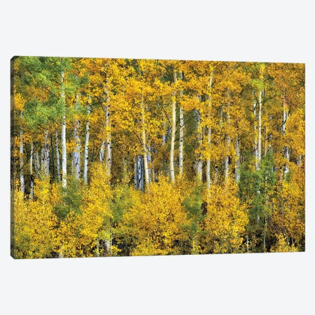Yellow Woods III Canvas Print #DDR81} by David Drost Canvas Art