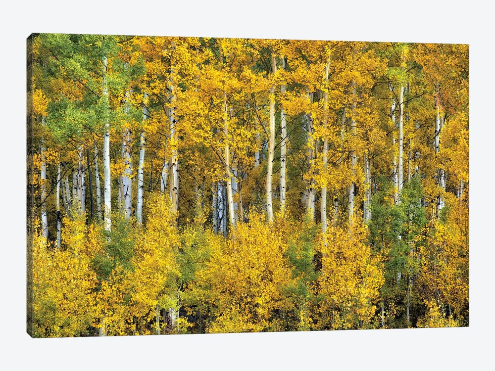 Yellow Woods III by David Drost 1-piece Canvas Artwork