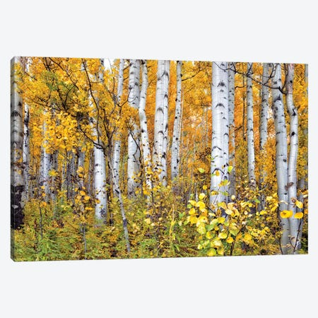 Yellow Woods IV Canvas Print #DDR82} by David Drost Canvas Wall Art