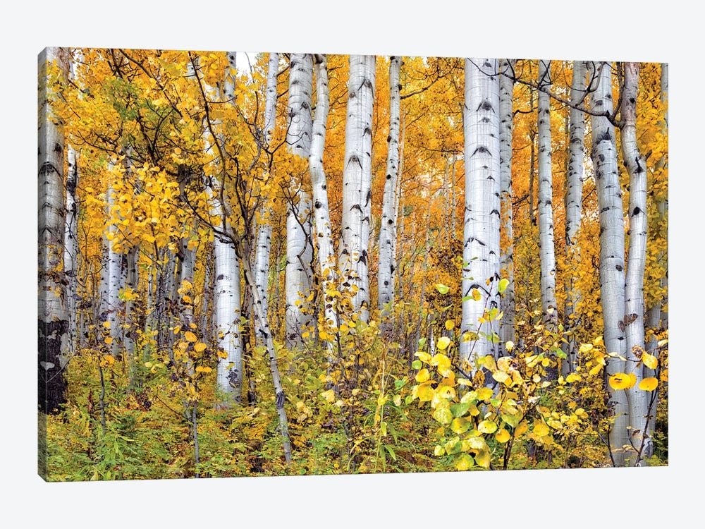Yellow Woods IV by David Drost 1-piece Canvas Art Print