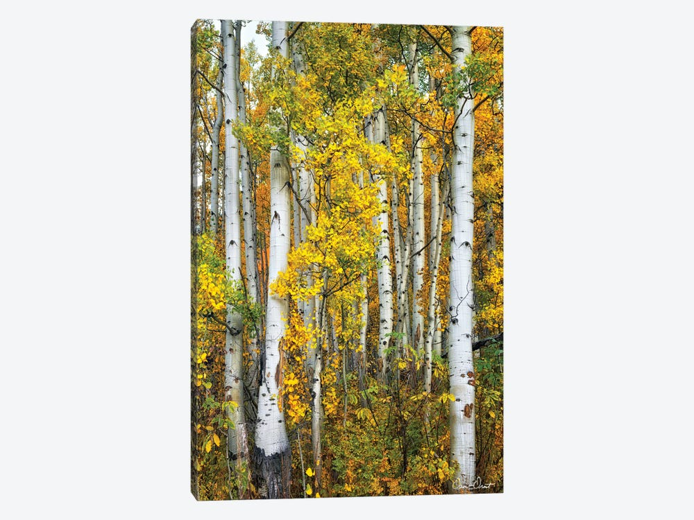 Yellow Woods V by David Drost 1-piece Canvas Art