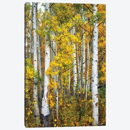 Yellow Woods V Canvas Print #DDR83} by David Drost Canvas Artwork