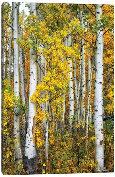 Yellow Woods V Canvas Art Print