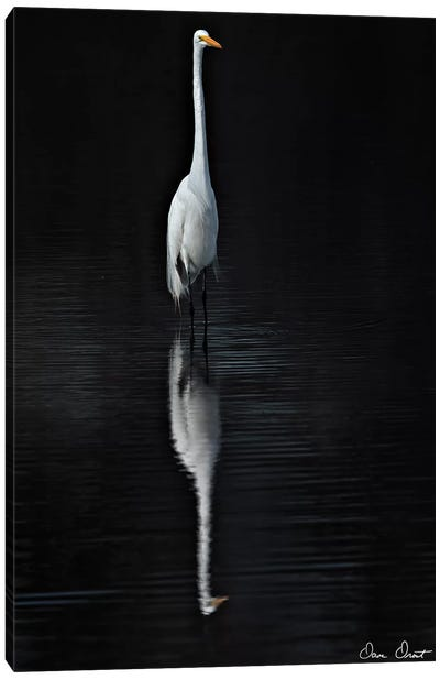Elegant Egret I Canvas Art Print