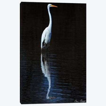 Elegant Egret II Canvas Print #DDR85} by David Drost Art Print