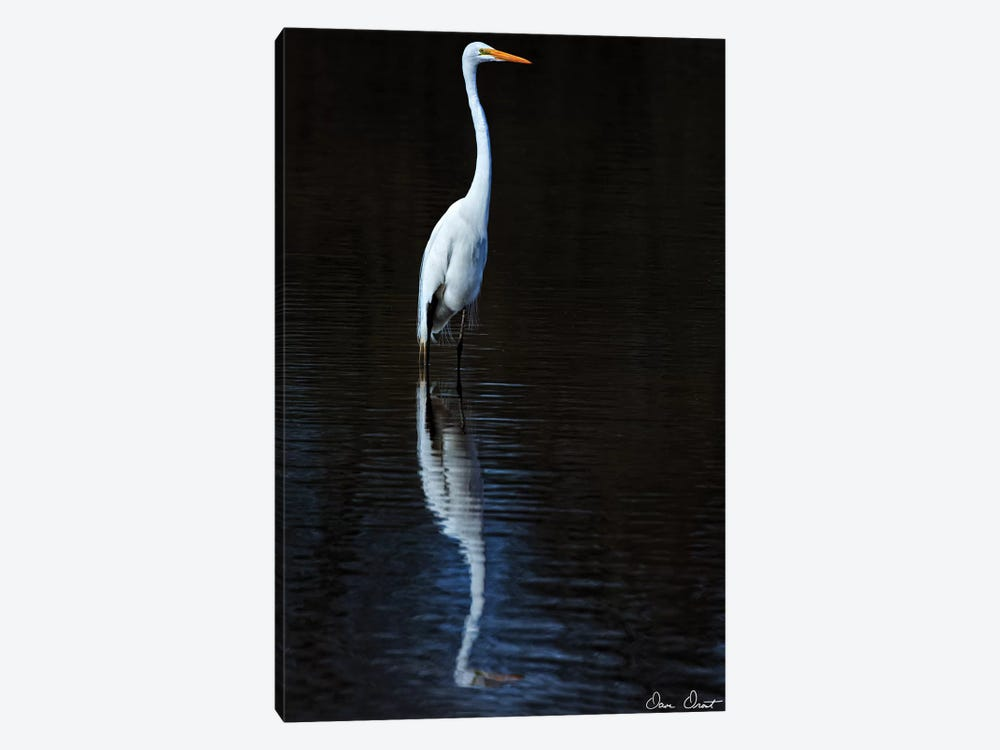 Elegant Egret II by David Drost 1-piece Canvas Artwork