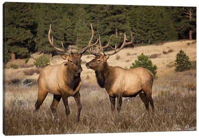 Elk Study IV Canvas Art Print